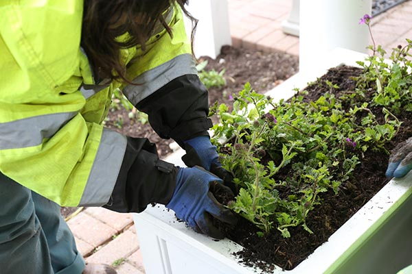 Image of lady planting flowers